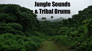 Jungle Sounds and Tribal Drums